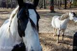 415 Wild Horse Lane - Photo 44