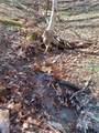 0 Black Bear Trail - Photo 6