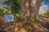 14 Rustling Pine Trail - Photo 29