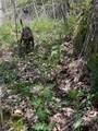 21 Hyacinth Drive - Photo 10