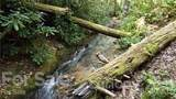 49 Creekside Loop - Photo 8