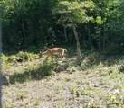 181 Lone Laurel Trail - Photo 26