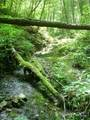 0 Winding Creek Drive - Photo 5
