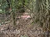 20 (MOL)Acres Off Vineyard Loop - Photo 13