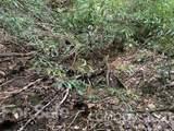 20 (MOL)Acres Off Vineyard Loop - Photo 3