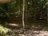 20 (MOL)Acres Off Vineyard Loop - Photo 30