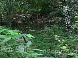 20 (MOL)Acres Off Vineyard Loop - Photo 7