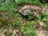 20 (MOL)Acres Off Vineyard Loop - Photo 10