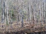 Lot 99 Whispering Woods Path - Photo 3