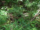 1491 Winding Creek Drive - Photo 2