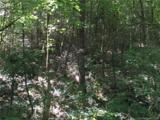 TBD (2.58 acres) Wild Iris Lane - Photo 3