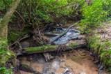 2397 Diamond Creek Road - Photo 17