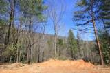 102 Acres Buffalo Mountain Road - Photo 13