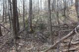 38.54 acres Sams Branch Road - Photo 10