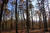 Lot 20 Locust Ridge - Photo 4