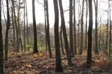 Lot 20 Locust Ridge - Photo 9