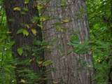 000 Whispering Woods Path - Photo 6