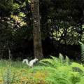 48 Grey Fox Trail - Photo 29