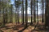 L2 Mountain Brook Trail - Photo 2