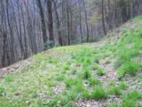 Lot 284 Running Deer Trail - Photo 12