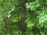 Lot 284 Running Deer Trail - Photo 17