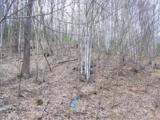 Lot 284 Running Deer Trail - Photo 24