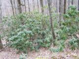 Lot 284 Running Deer Trail - Photo 26