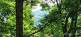 Lot 101 Tuxedo Ridge - Photo 13