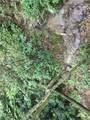 TBD Bear Trail - Photo 22