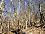 TBD Red Oak Forest Road - Photo 4