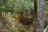 151 Rattlesnake Trail - Photo 9