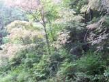 Lot 70 Running Deer Lane - Photo 2