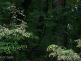 Lot 70 Running Deer Lane - Photo 9