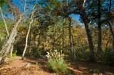 126 Powder Creek Trail - Photo 2