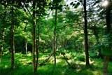 126 Powder Creek Trail - Photo 4