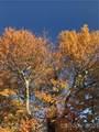 Lot 16D Wolf Laurel Drive - Photo 8