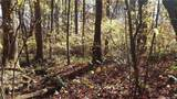 3.98 Acres+- Log Gap Road - Photo 14