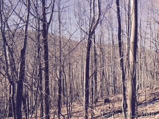 Lot 87 Blue Mist Way #87, Arden, NC 28704 (#3368473) :: Puffer Properties