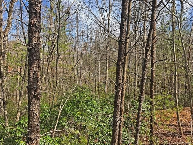 LOT 61 Lakewood Drive, Lake Lure, NC 28746 (#3369601) :: Caulder Realty and Land Co.