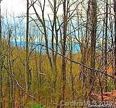 000 Elk Mountain Scenic Highway 1, 2, 3, Asheville, NC 28804 (#3439505) :: Exit Mountain Realty