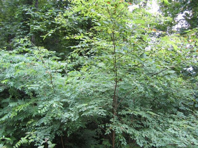 Lot 10 Pointer Trail, Waynesville, NC 28786 (#3525520) :: Charlotte Home Experts