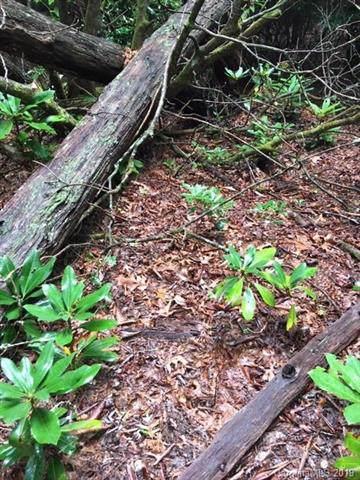 000 Rich Mountain Road, Brevard, NC 28712 (#3543234) :: Carver Pressley, REALTORS®