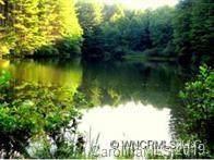 4 Gordon Lane, Burnsville, NC 28714 (#3559084) :: Robert Greene Real Estate, Inc.