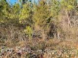6 Pine Cone Trail - Photo 5