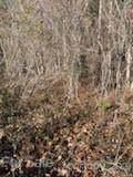 6 Pine Cone Trail - Photo 7