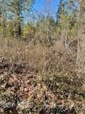 6 Pine Cone Trail - Photo 8