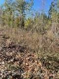 6 Pine Cone Trail - Photo 9