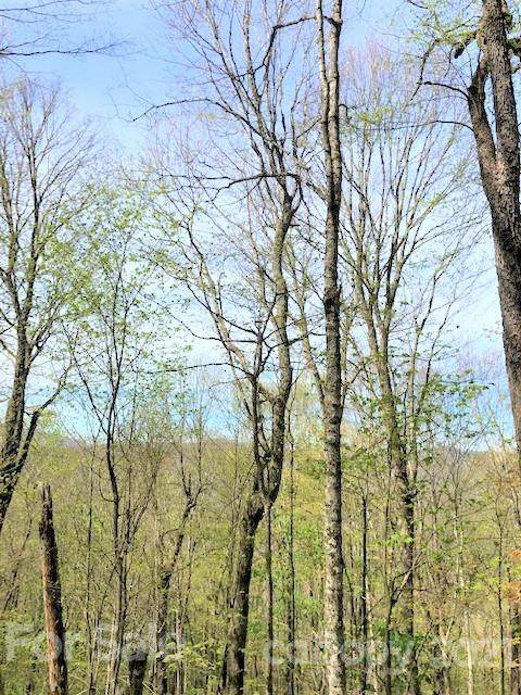 OFF Oswego Way, Waynesville, NC 28785 (#3735579) :: Stephen Cooley Real Estate Group