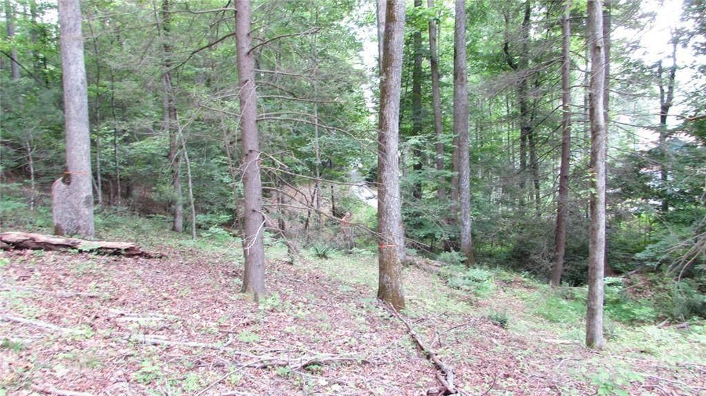 1625 TBD Deer Park Lake Road - Photo 1