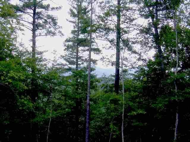 Lot 39 Heartwood Forest Drive #39, Lenoir, NC 28645 (#9533761) :: High Performance Real Estate Advisors